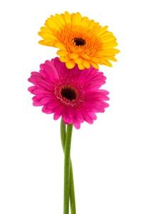 bloemen voor nascholing thuiskapper